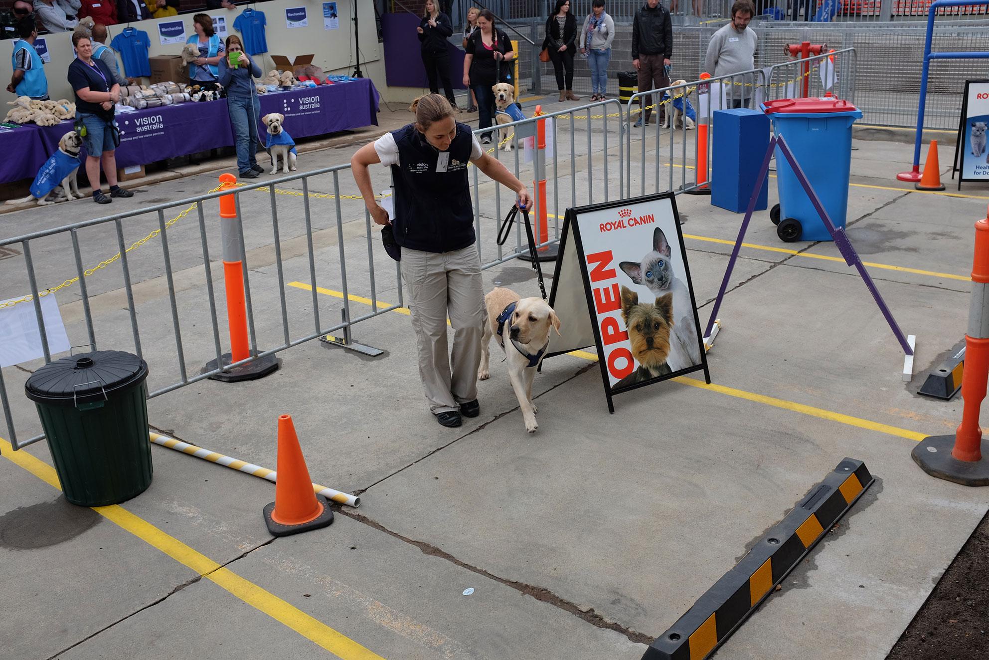 Service dog training program for veterans k9 partners for.