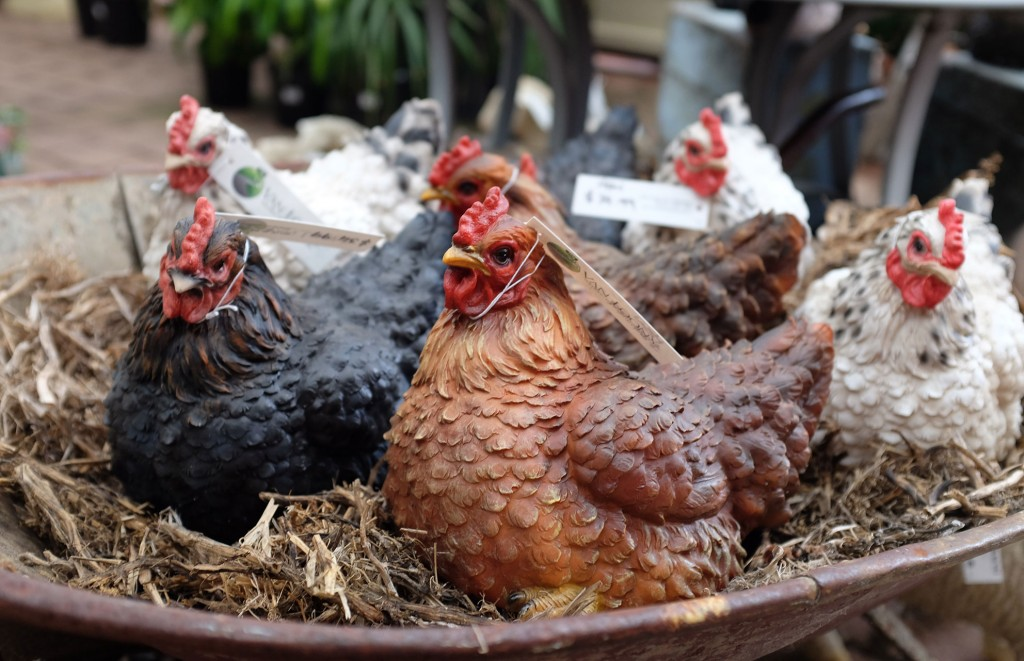 Van Loons Chickens