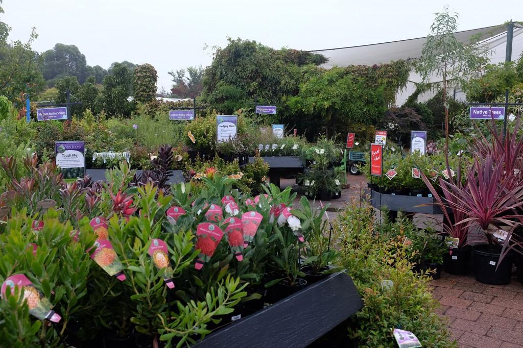 Van Loons Plants