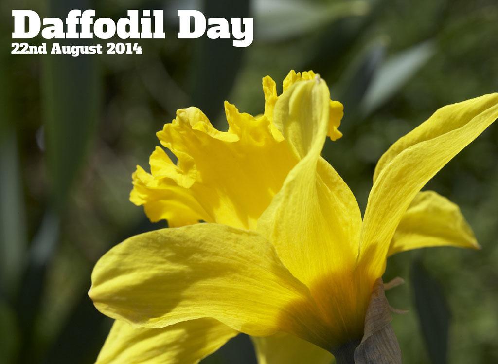 daffodil day - photo #24
