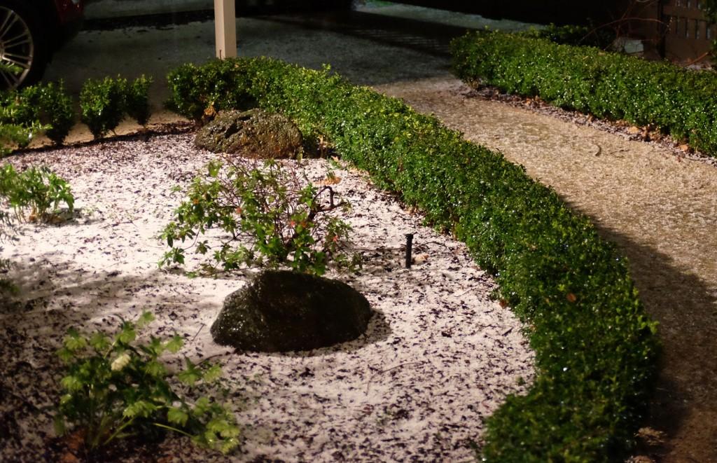Hail in garden