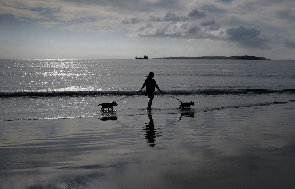 Beach-Pups