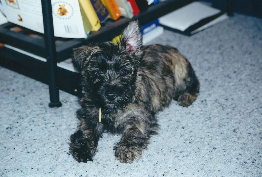 Bill-Pup