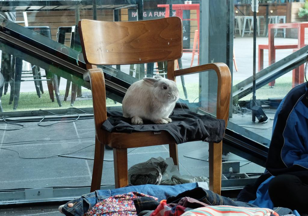 Suitcase-Rummage-bunny