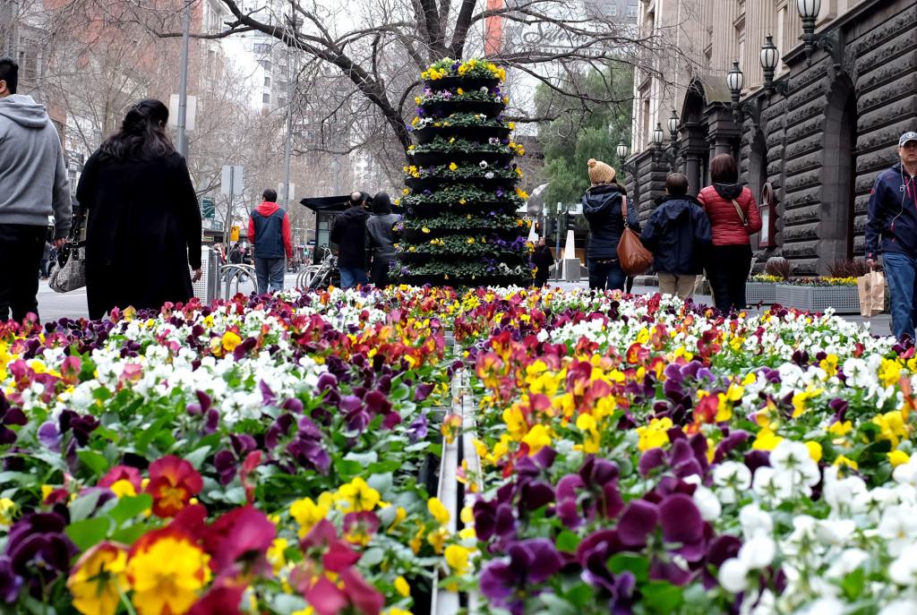 Melbourne-flowers