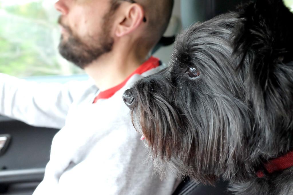 Cairn-terrier-navigator