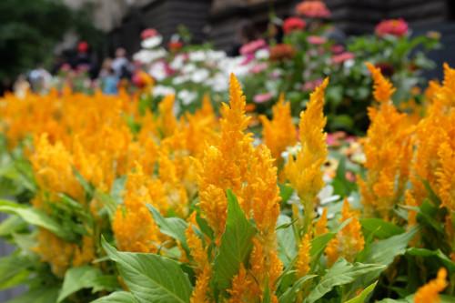 Melbourne-City-Flowers