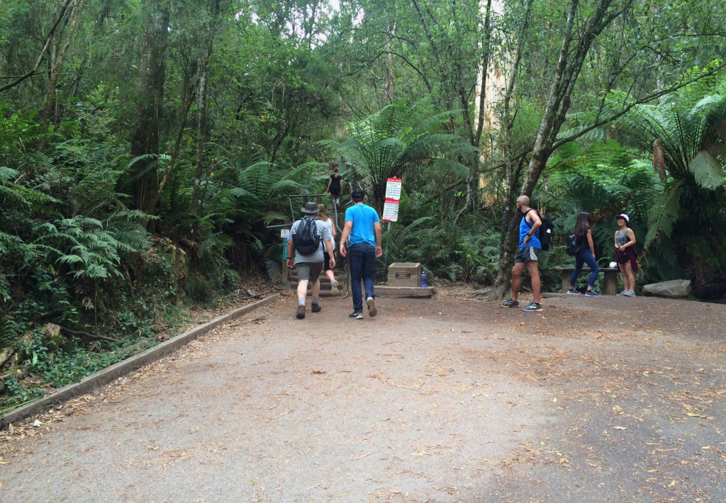 1000-Steps-Mt-Dandenong