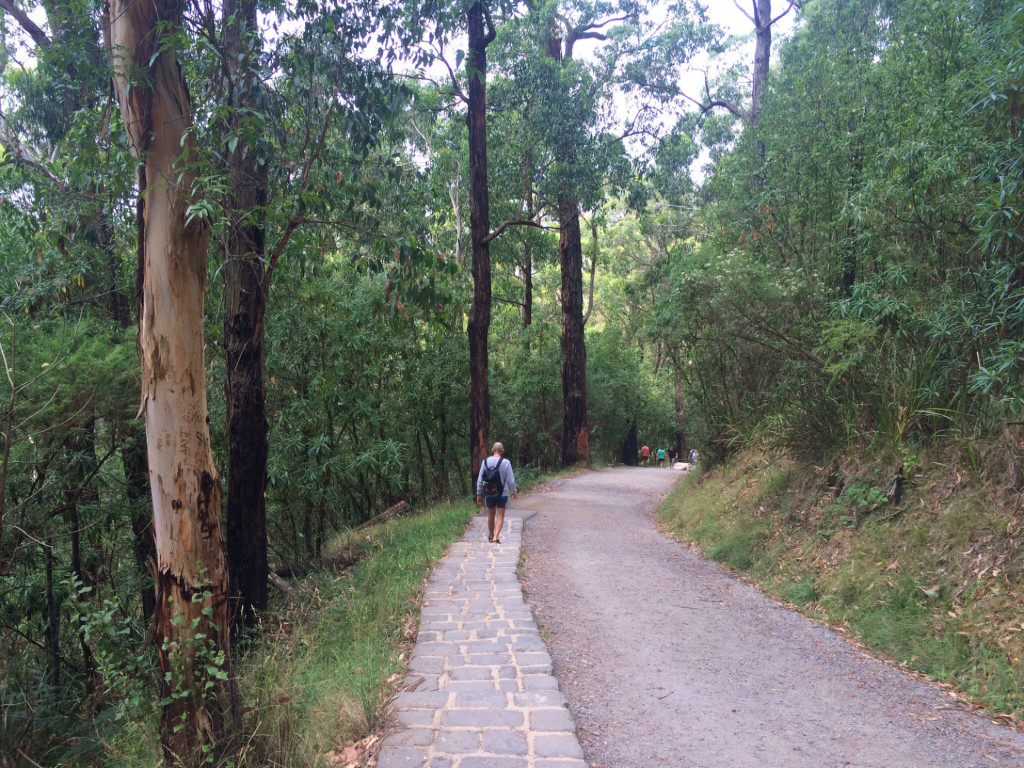 Lyrebird-Track-Mt-Dandenong