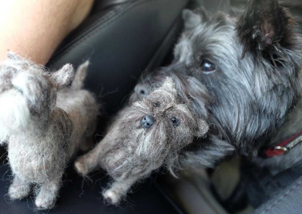 Cairn-Terrier-Feltie-1