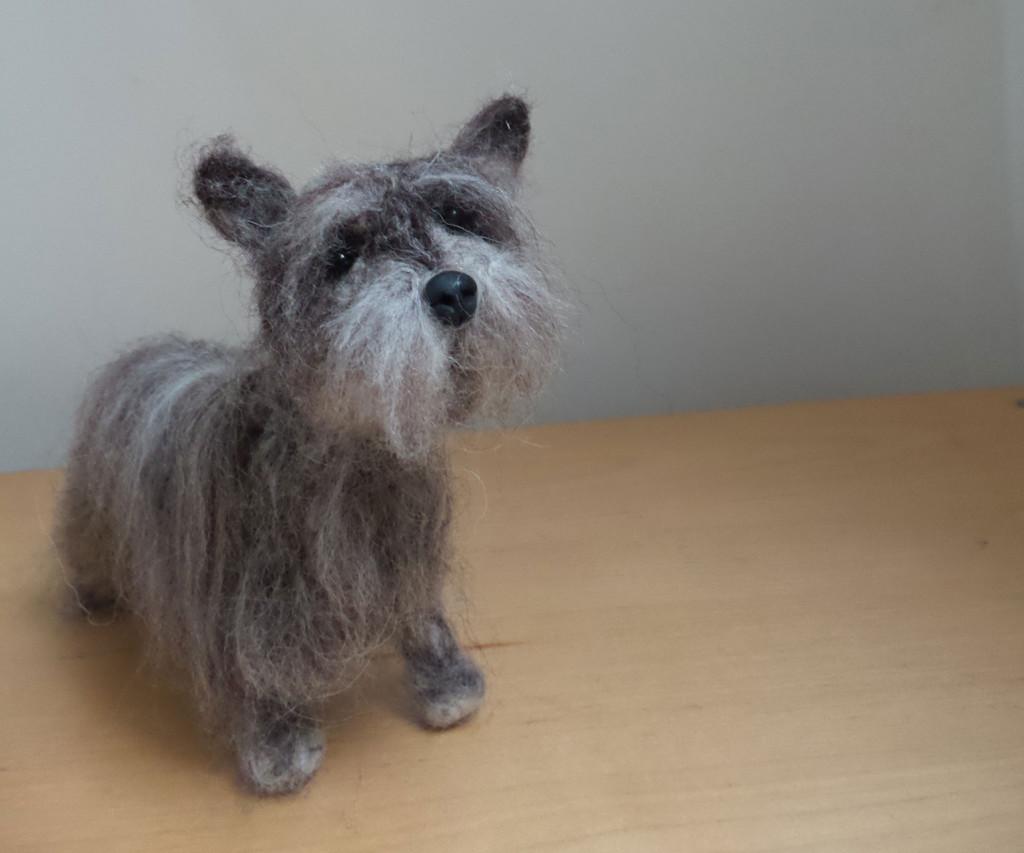 Cairn-Terrier-Feltie-3