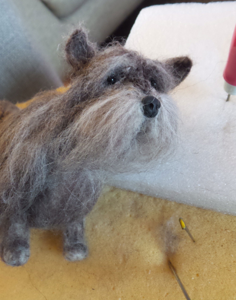 Cairn-Terrier-Feltie-4