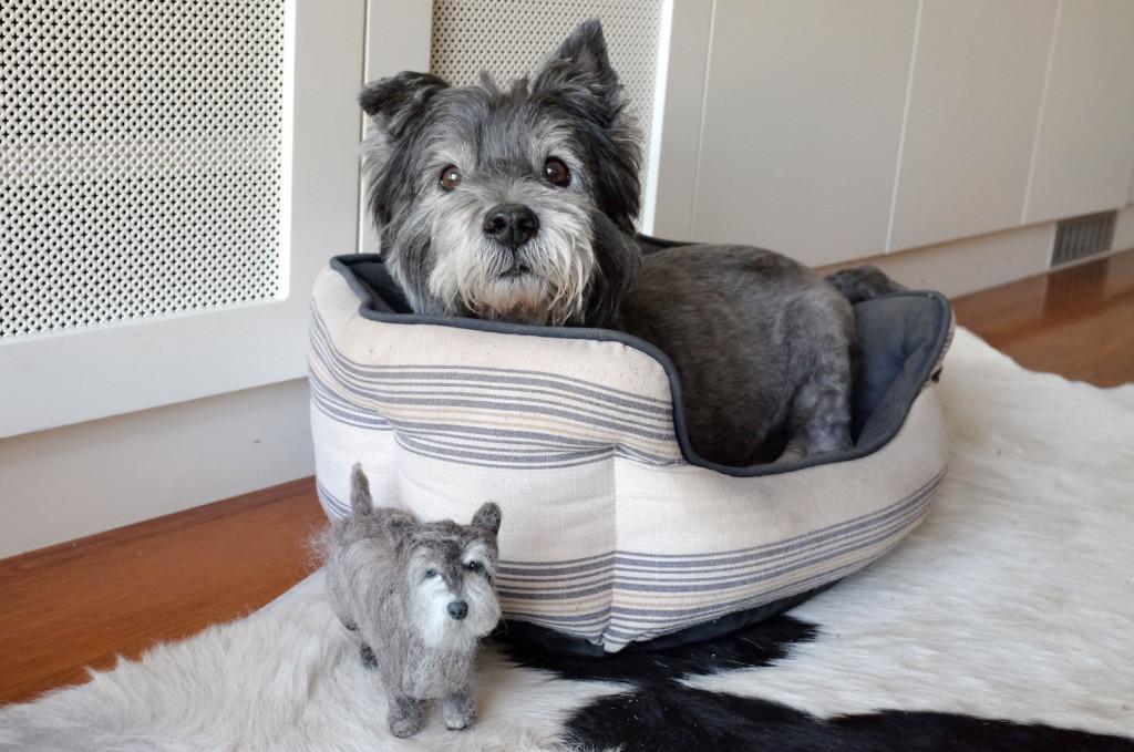 Cairn-Terrier-Feltie-6