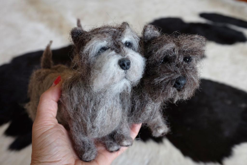 Cairn-Terrier-Feltie-7