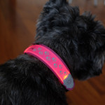 Light up your walk with FlashDog