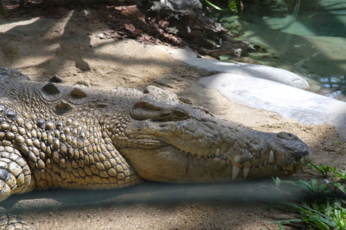 Cairns-Zoom-Goliath