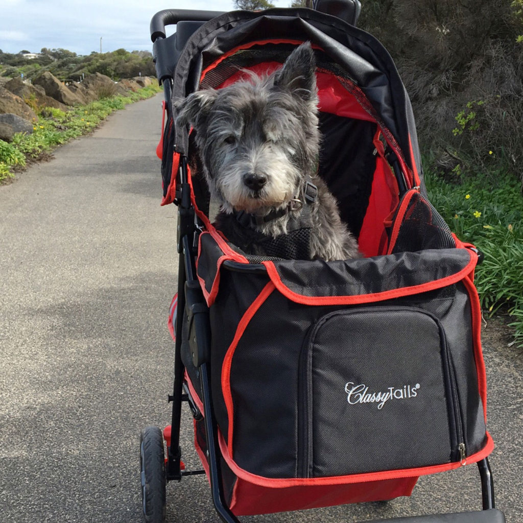 bill-in-dog-buggy