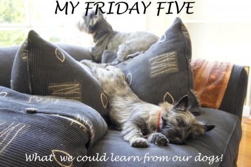 Friday-Five-Dogs