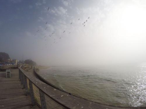 Summer-Fog