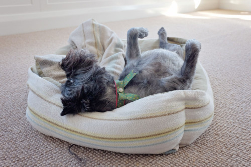 Worn-out-Terrier