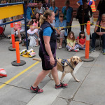 Camp SEDA Open Day 2016 - Seeing Eye Dogs in Training