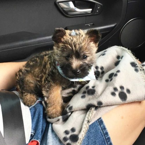 Toby-first-car-ride